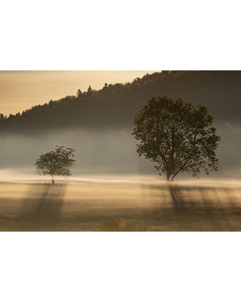Brumes et jeux de lumière - photographie Franck Fouquet  Jeux de lumières et bancs de brume Vallée de l'Aube (Parc national de f
