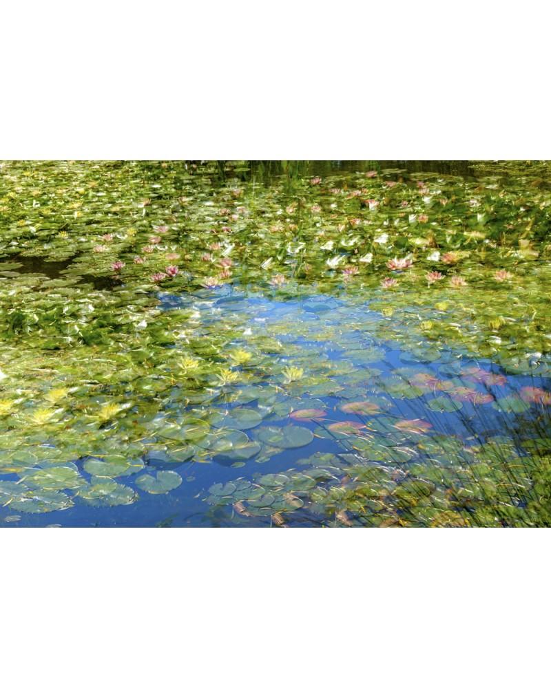 Le Bassin aux Nymphéas - photographie Arnaud Nédaud  Jardin japonais de Claude Monet