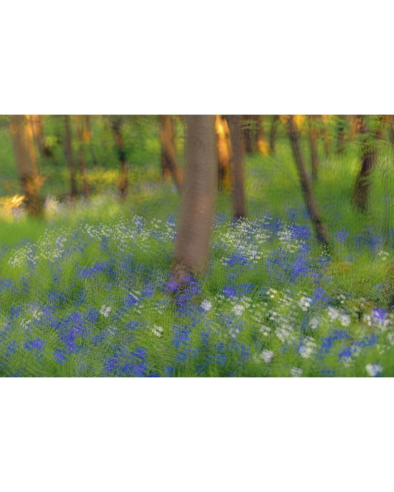 Ballade en forêt - photographie Arnaud Nédaud  Paysage de printemps