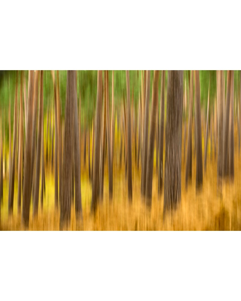Impression d'automne - photographie Arnaud Nédaud