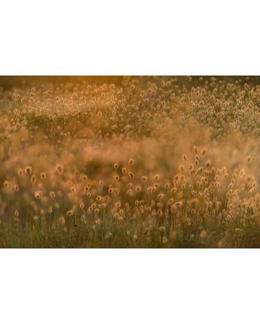 Summer Impression - photographie Arnaud Nédaud