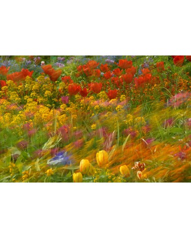 Impression Monet - photographie Arnaud Nédaud