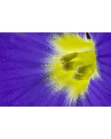 Explosion - photographie Diane & Olivier Castanet-Hervieu   Explosion de couleurs