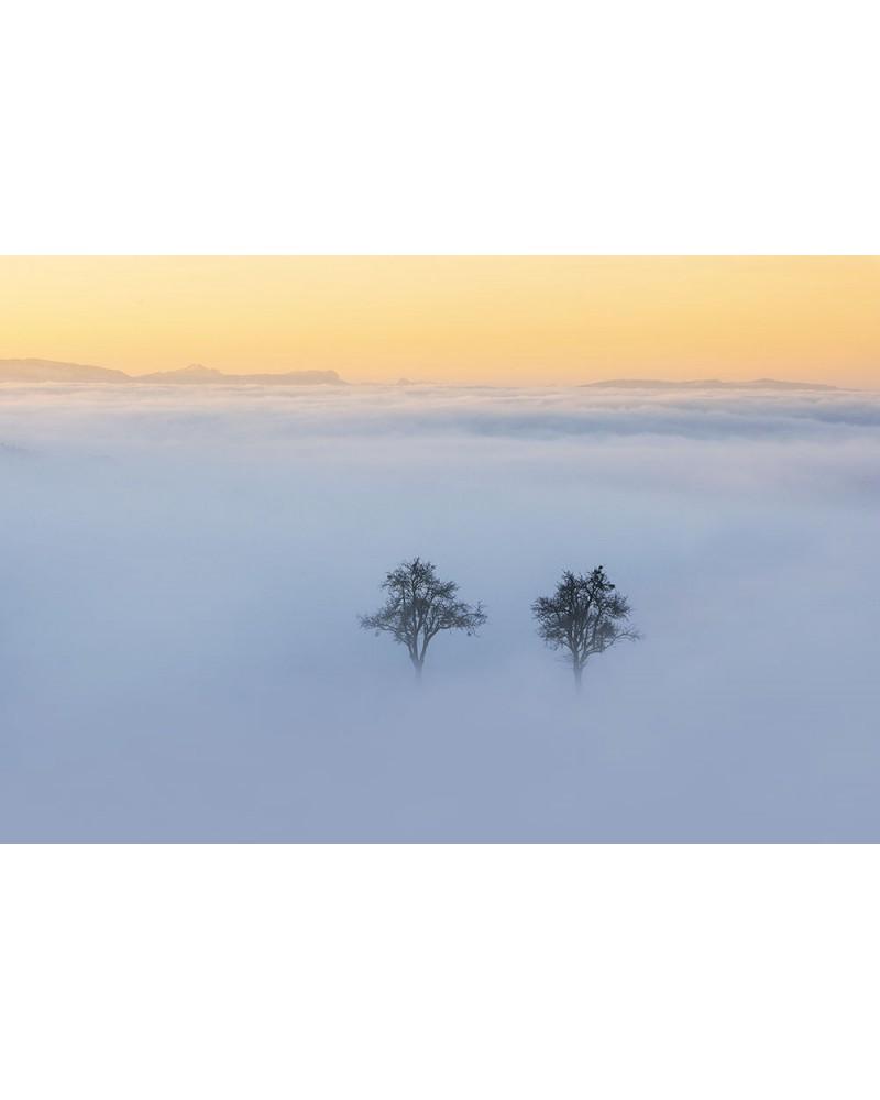 Amoureux solitaires - photographie Nicolas Gascard   A l'aube, au coeur de la brume automnale, deux arbres sont apparus comme p