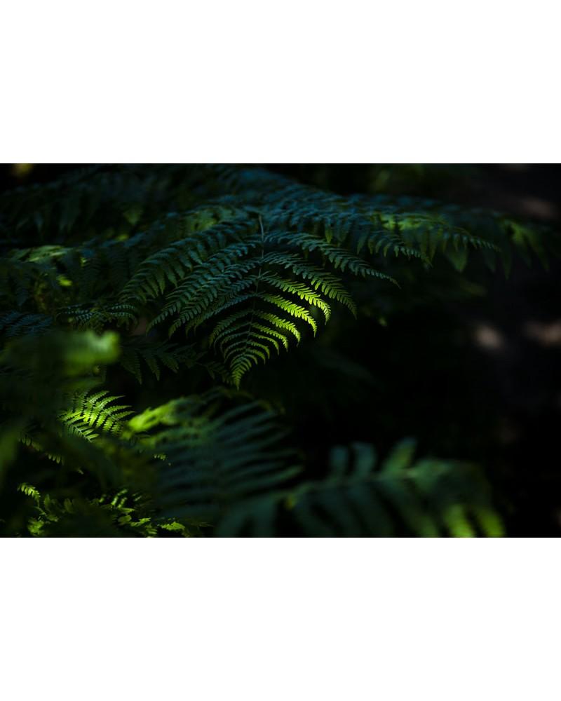 Ombres et lumières - photographie Nicolas Gascard   Jeu de lumières au cœur de la tourbière.