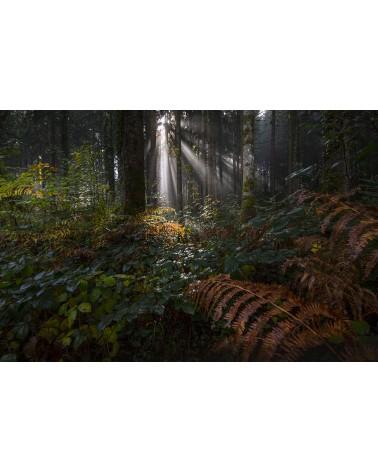 Forêt tropicale - photographie Nicolas Gascard   Ambiance tropicale en pleine forêt jurassienne.