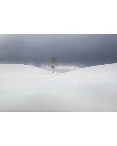 Le solitaire - photographie Nicolas Gascard   Ambiance minimaliste sur les hautes combes jurassiennes.