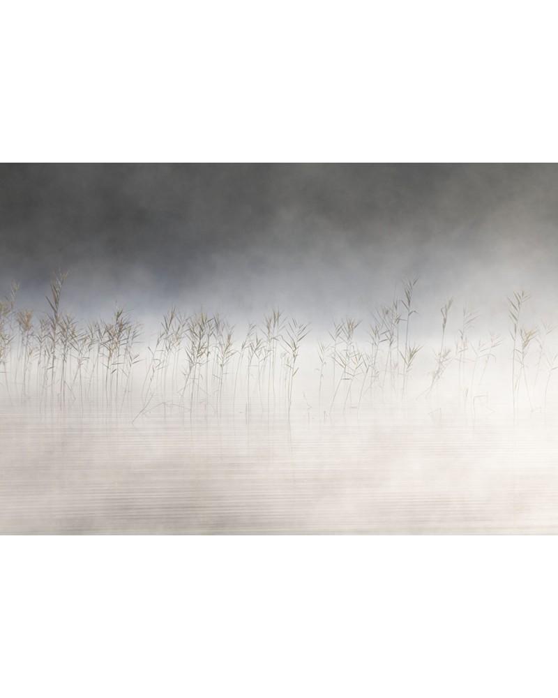 Danse avec la brume - photographie Nicolas Gascard   Roseau au bord du lac d'Ilay.
