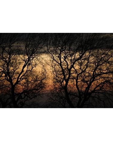 Mimétisme - photographie Nicolas Gascard   L'art du camouflage au cœur de la forêt jurassienne.