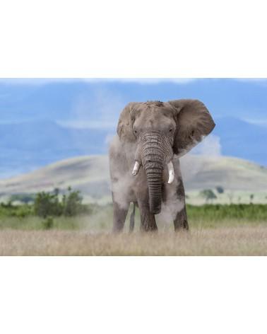 Bain de poussière - photographie Christine & Michel Denis-Huot   Ce mâle éléphant s'arrose de poussière pour se protéger de