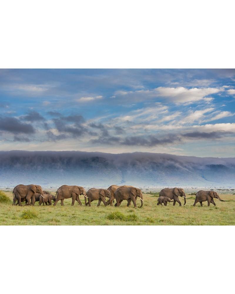 Troupe d'éléphants en marche - photographie Christine & Michel Denis-Huot   Troupe d'éléphants en déplacement dans la plain