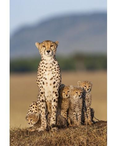 Femelle et jeunes guépards sur une termitière - photographie Christine & Michel Denis-Huot   Femelle guépard et ses jeunes