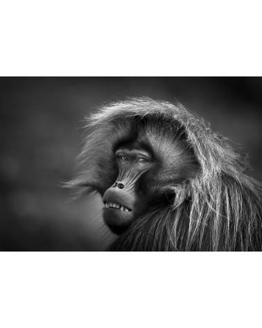 Droit à l'image - photographie Véronique & Patrice Quillard  Expérience unique, croiser le regard de ce magnifique primate