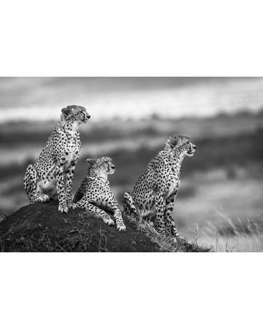 Guépards sur termitière - photographie Véronique & Patrice Quillard  Une mère guépard avec ses deux jeunes ados
