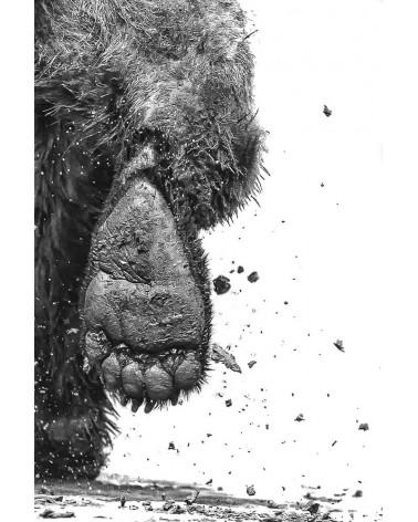 La fuite - photographie Philippe Cabanel  Fuite d'un Grizzly