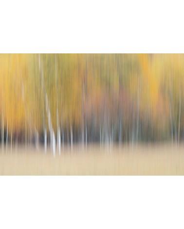 Couleurs d'automne - photographie Fabien Gréban Vision abstraite de la forêt Paysage de forêt dans le massif du Jura