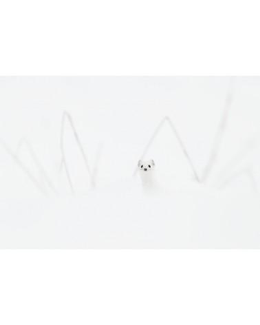 Le lutin blanc - photographie Fabien Gréban  Hermine blanche dans la prairie enneigée