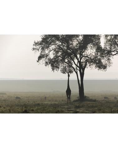 Matinale africaine - photographie Fabrice Guérin  Silhouette d'une girafe dans le bush embrumé